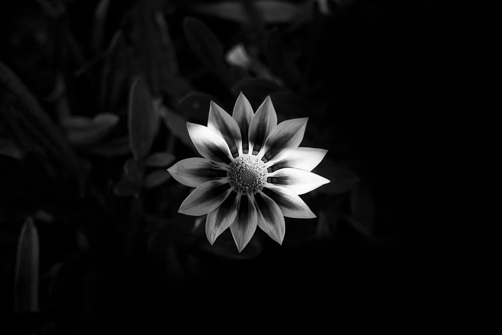 Nature flower pattern